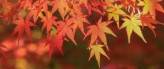 秋の健康的な過ごし方。